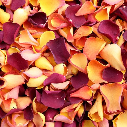 Autumn freeze dried Rose Petal Mix from Petals & Roses