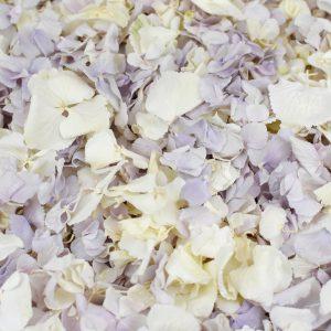 Delicate Lace Freeze Fried Hydrangea Petals
