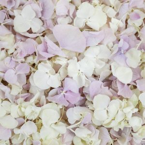 Delicate Lace Hydrangea Petal Mix - White and Pastel Lilac