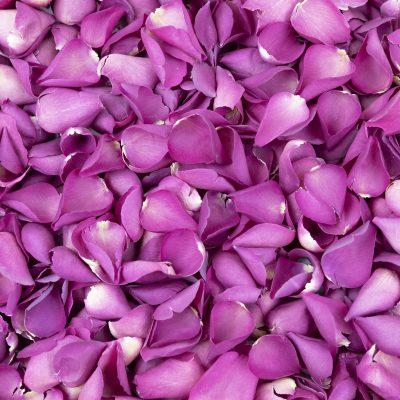 Fuchsia Freeze Dried Rose Petals