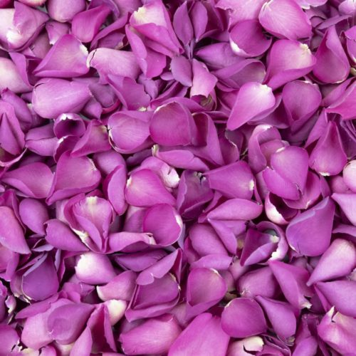 Fuchsia Freeze Dried Rose Petals