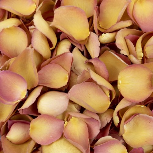 Orange Freeze Dried Rose Petals
