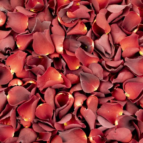 Romantic Red Freeze Dried Rose Petals