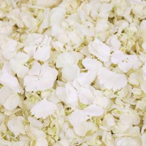 White Hydrangea Petals