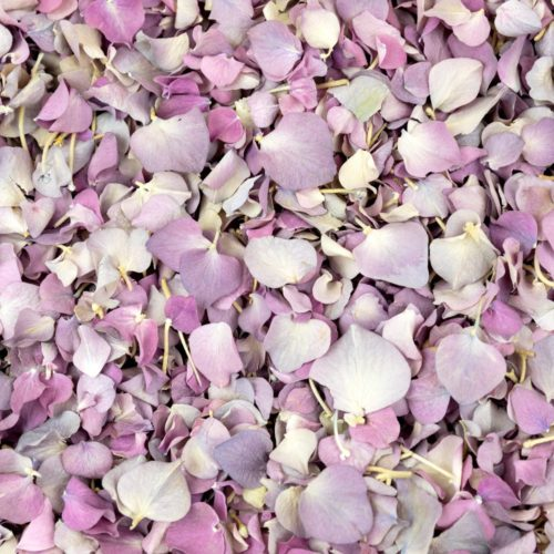 Wild Cherry Freeze Dried Hydrangea Petals