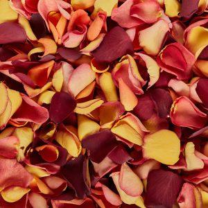 Autumn Mix petal colours