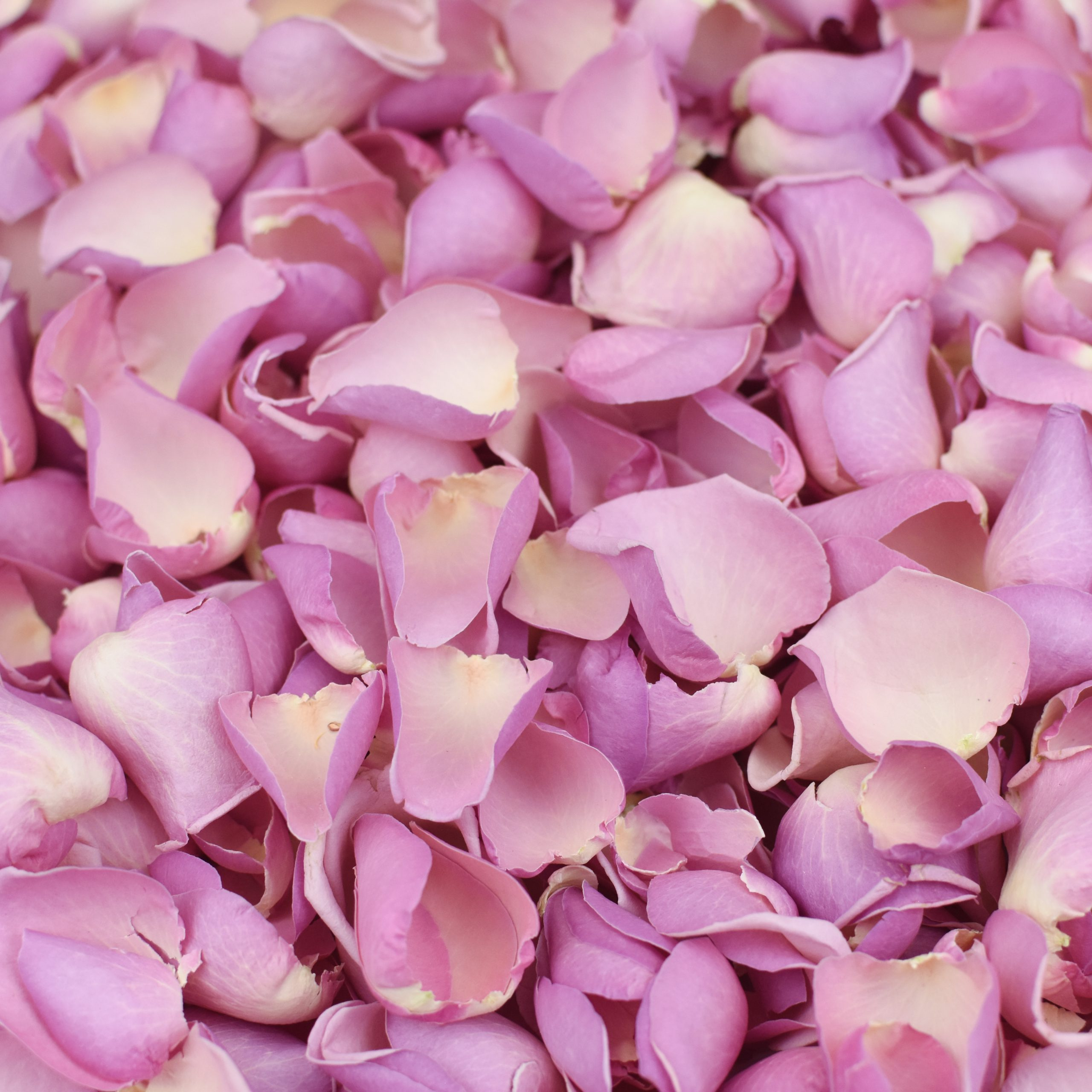 Candy Floss Petals And Roses