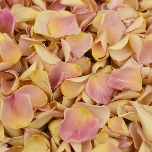 Coral petals, orange and peach hues