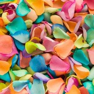 Rainbow coloured petals bright colourful