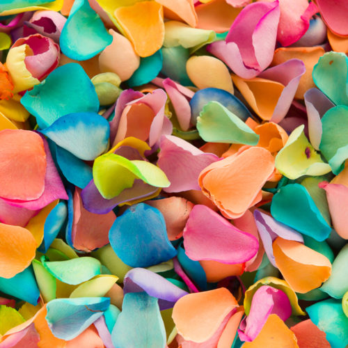 Rainbow coloured petals bright colourful