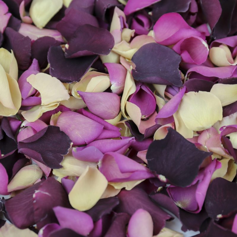 Romantic deep purple, pink and cream coloured petals