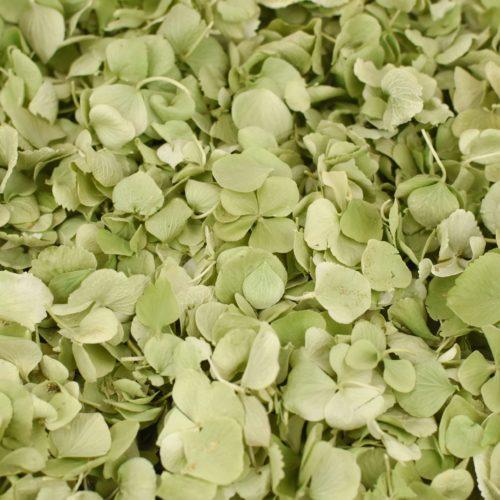 Sage green petal