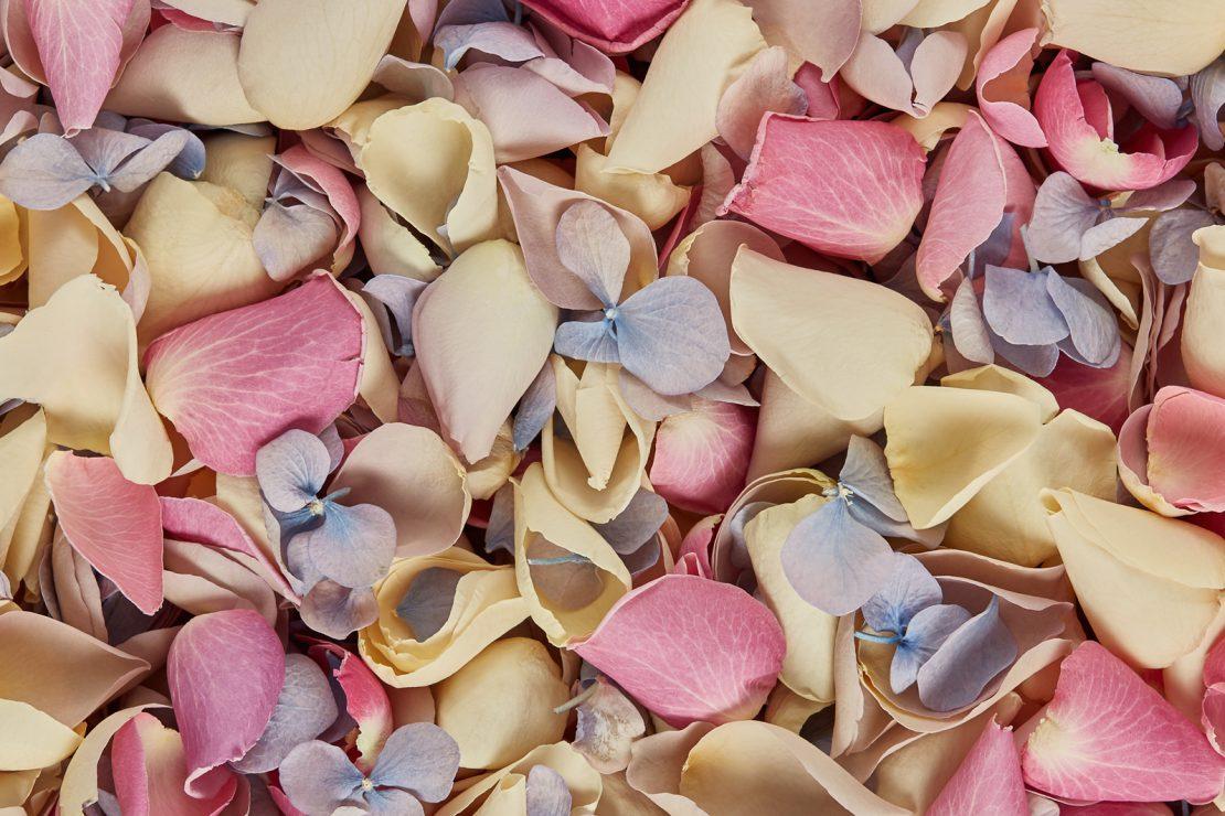 All Loose Petals