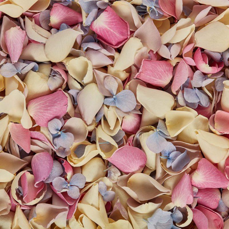 Summer colours mix pastel petals