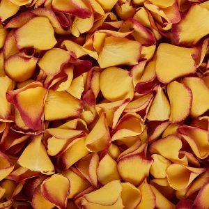 Sunset kiss vibrant orange petals
