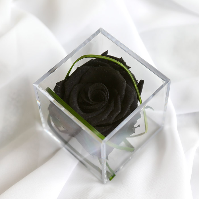 Black Timeless Rose Cube