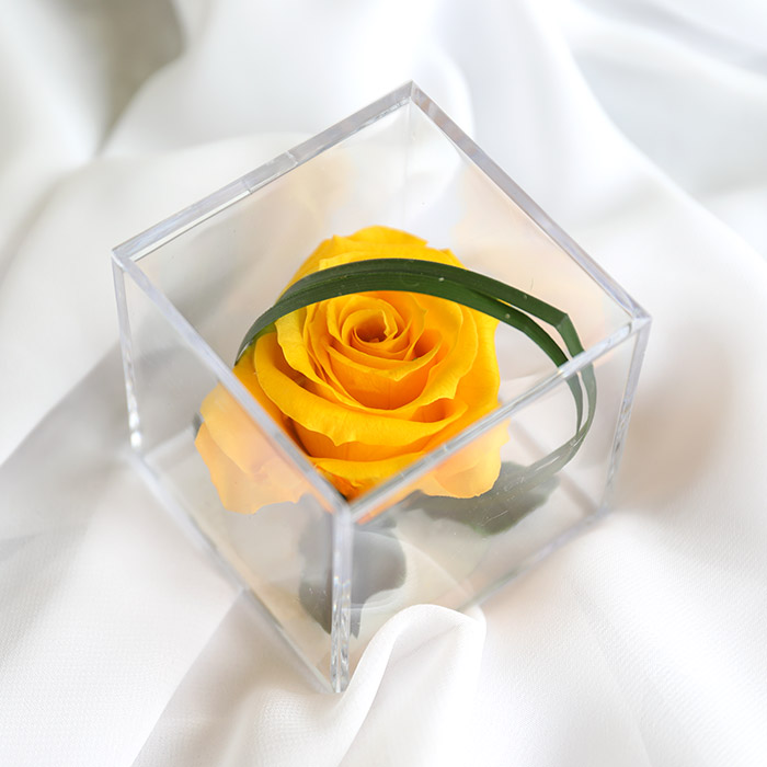 Yellow Timeless Rose Cube