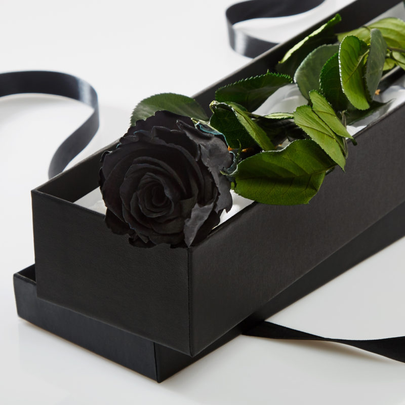 Black Timeless Rose Stem in Gift Box