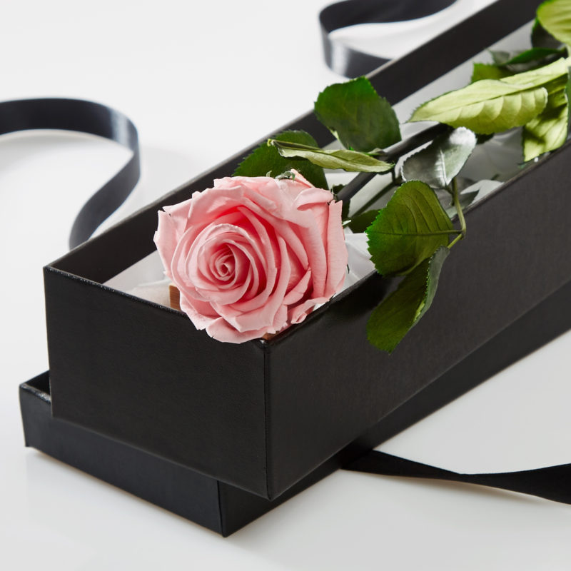 Pink Timeless Rose Stem in Gift Box
