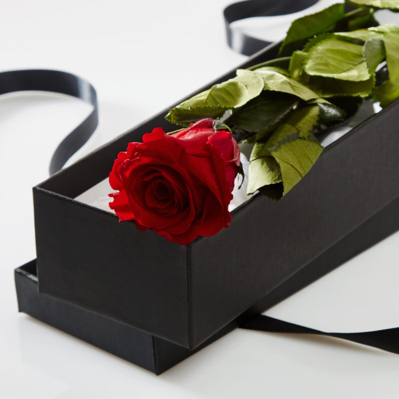 Red Timeless Rose Stem in Gift Box