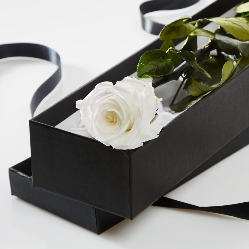 White Timeless Rose Stem in Gift Box