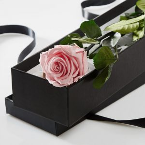 Single pink preserved rose in a silk lined black box