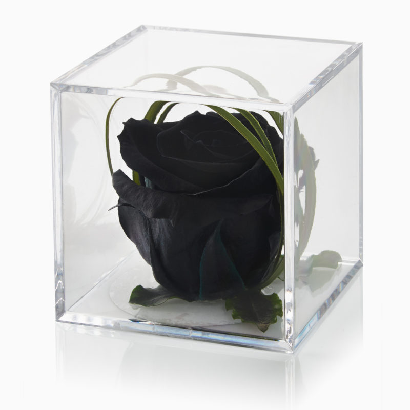 Black Timeless Rose Cube