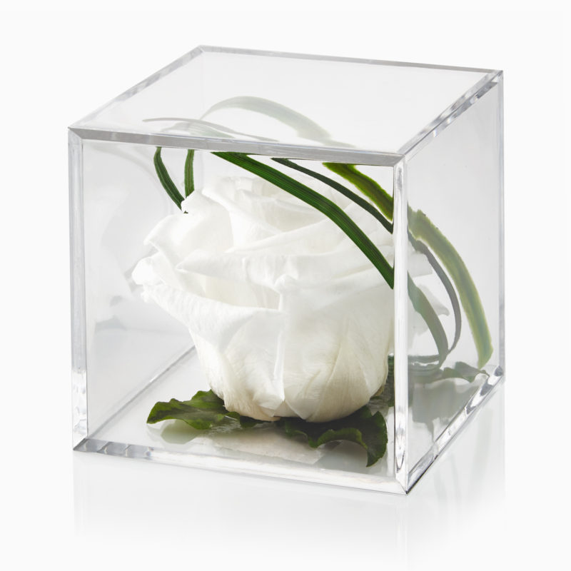White Timeless Rose Cube