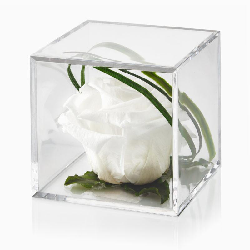 White Timeless Rose Cube