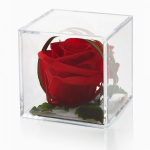 Timeless red preserved rose cube gift