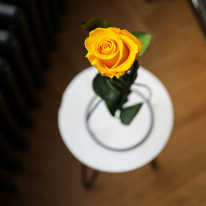 Petals & Roses Long-Lasting Preserved Yellow Single Rose