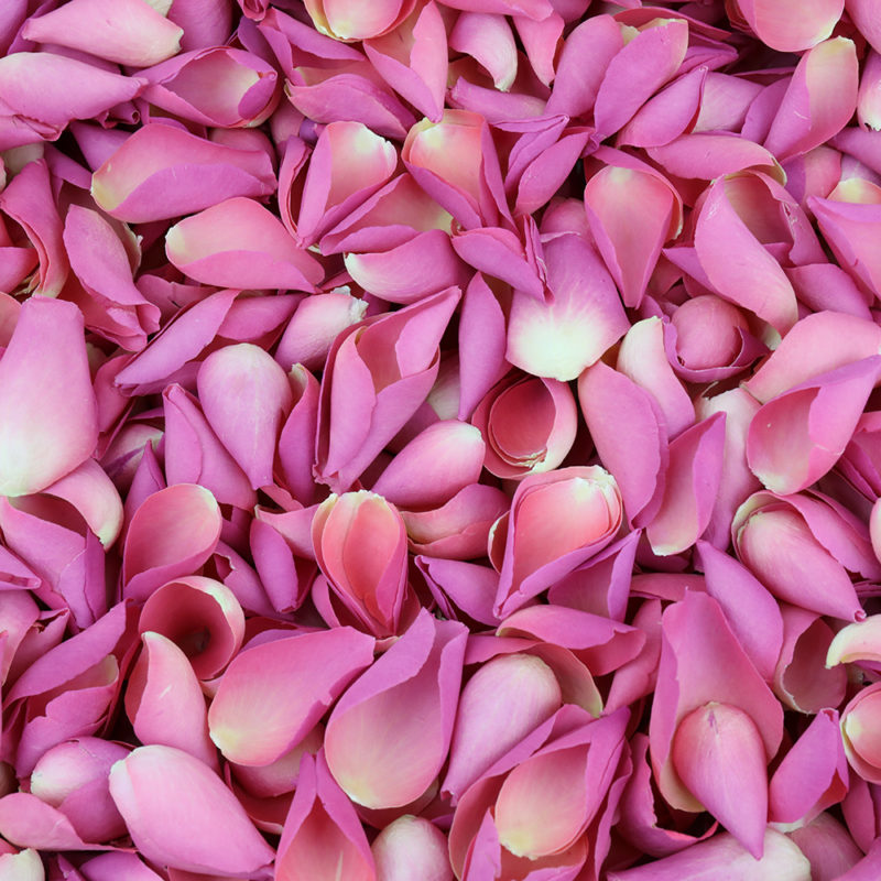 How to use Rose Petals in your DIY projects.
