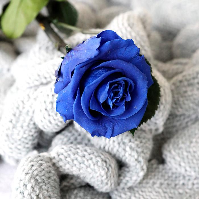 Preserved Rose Stems