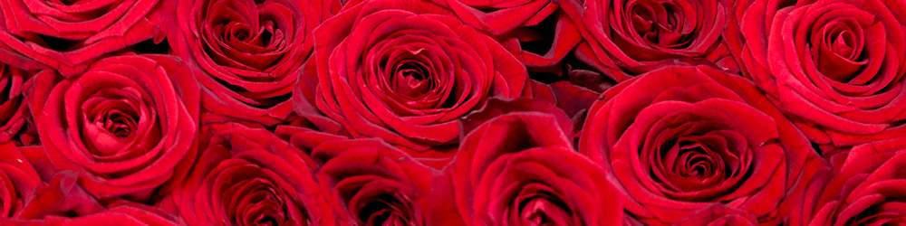 Petals & Roses Luxury Real Roses
