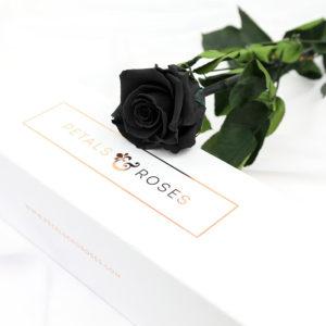 Luxury Black Preserved Single Rose Stem in gift box