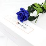 Preserved Infinity Blue Single Rose Stem Gift