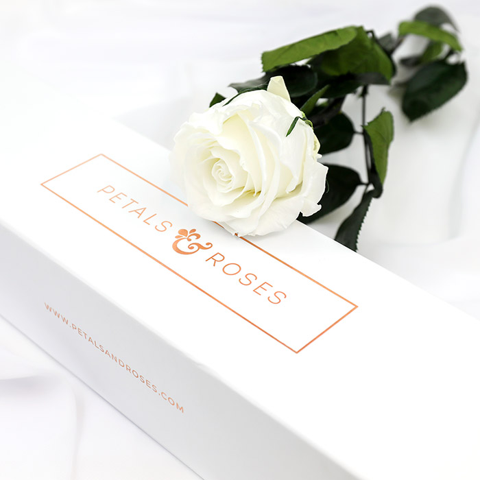 Preserved White Single Rose Stem in luxury gift box